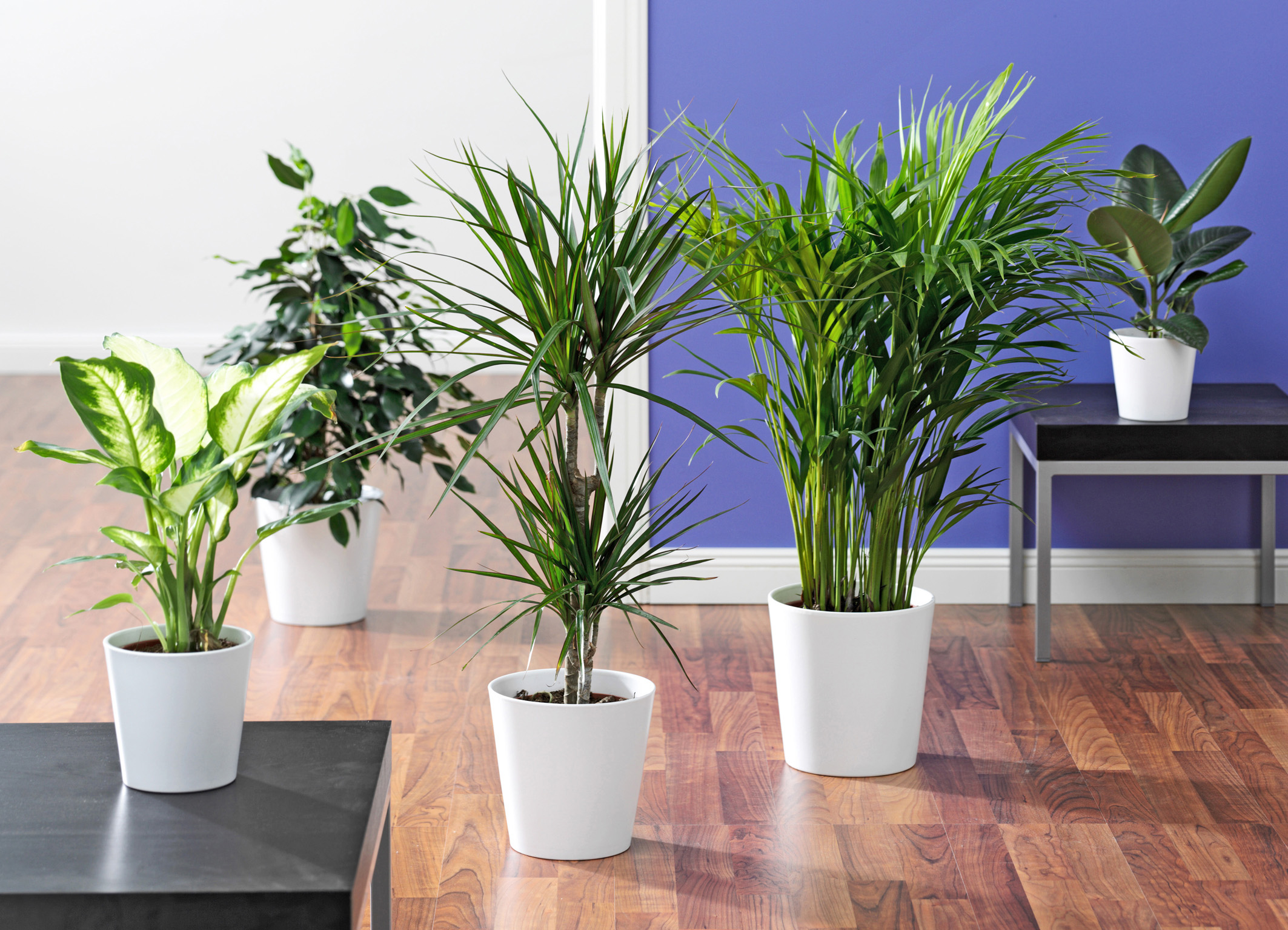 Wohnzimmer Pflanzen Groß ~ Wohndesign Ideen