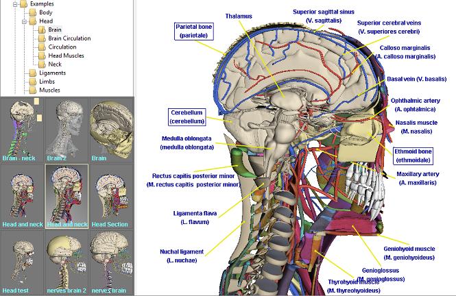 Anatomie Software kombiniert modernste 3D Visualisierung mit ...